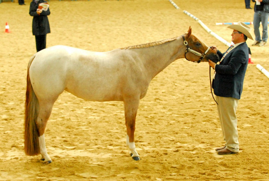 Günter Fischer and Youretheonethatiwant, one of BBQH's performance horses.
