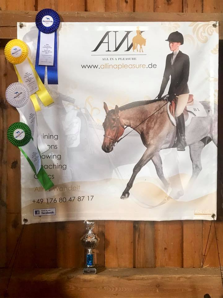 Alina's banner with the ribbons she won in the Green Hunter under Saddle