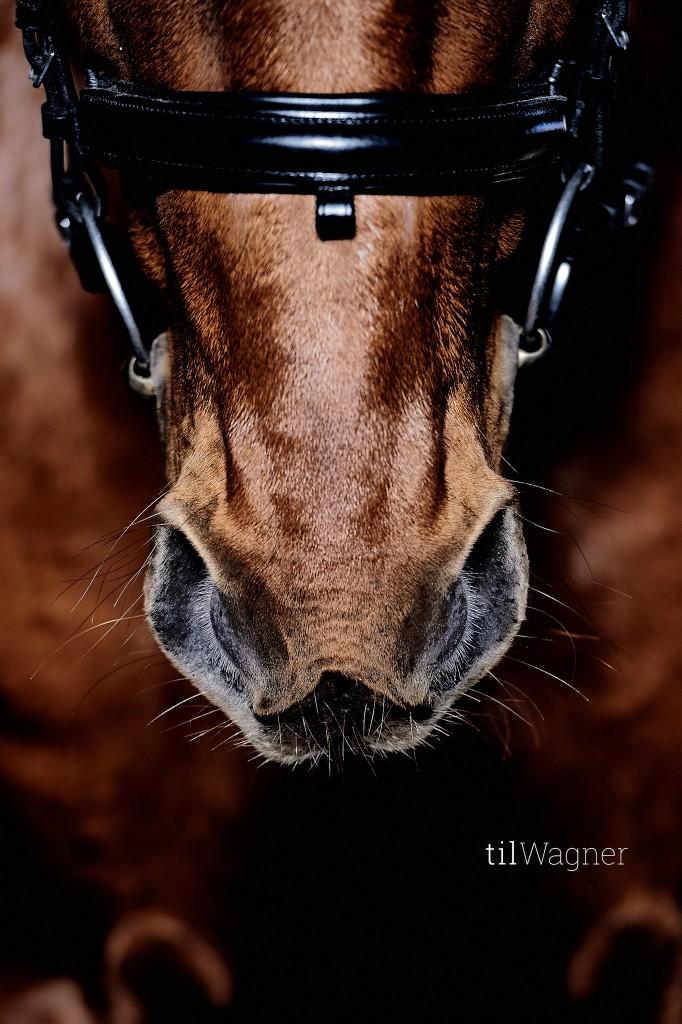 Tils Motive sind nicht ausschließlich Pferde aus der Westernszene; © Til Wagner Equine Photography