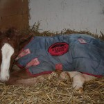 APHA filly: Third Hot Step x Zip Me In My Dress