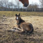 AQHA filly: Only Invitational x Raisin My Dress