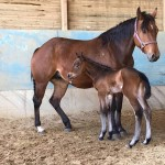 AQHA filly: TFR A Wisely Dream x Only Unique