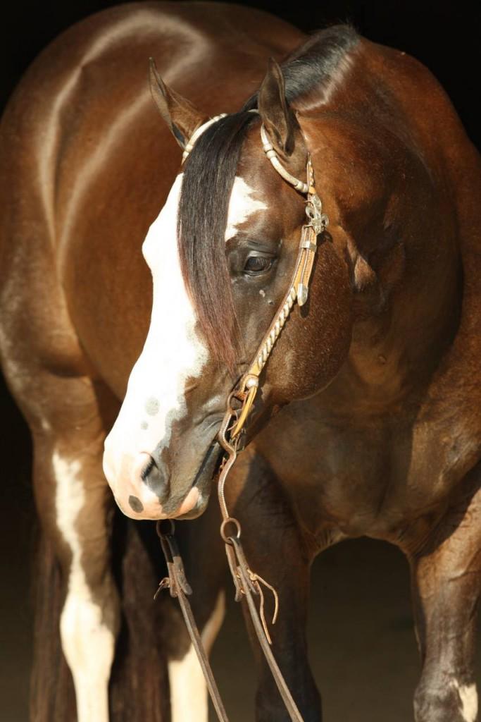 Original Cowboy, picture: Simons Show Horses