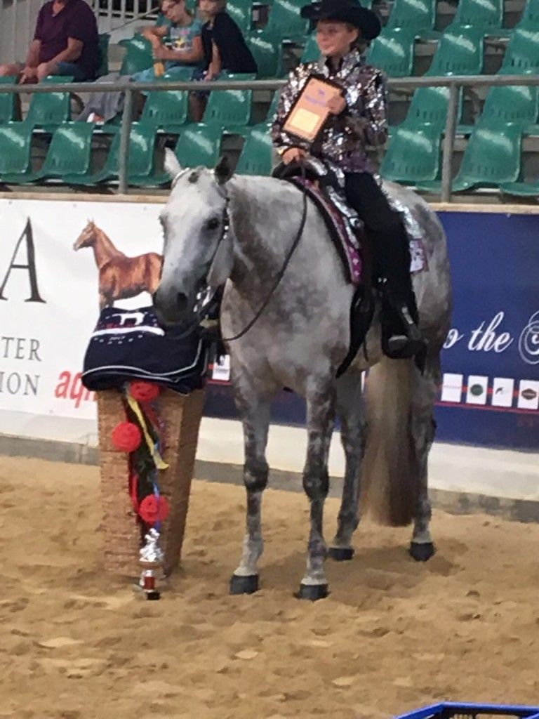 Desi and Only A Glamourgirl - European Champion Walk Trot Pleasure